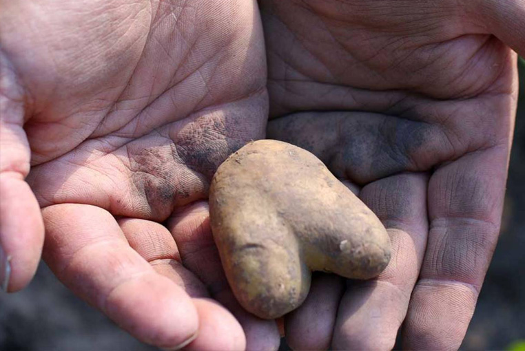 patatas-saludables